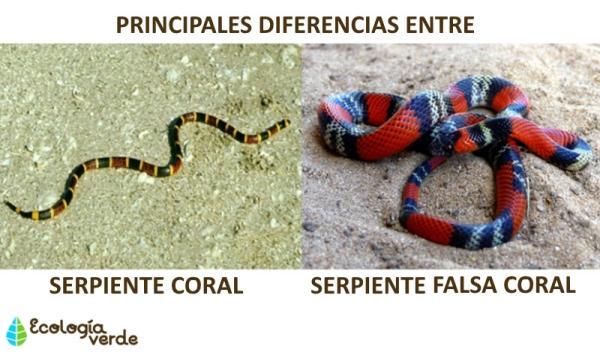 Diferencia entre serpiente coral y falsa coral