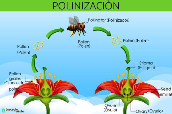 Qué es la polinización y sus tipos