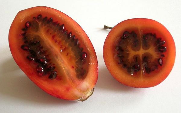 Cultivo de tomate de árbol - Cómo sembrar semillas de tomate de árbol