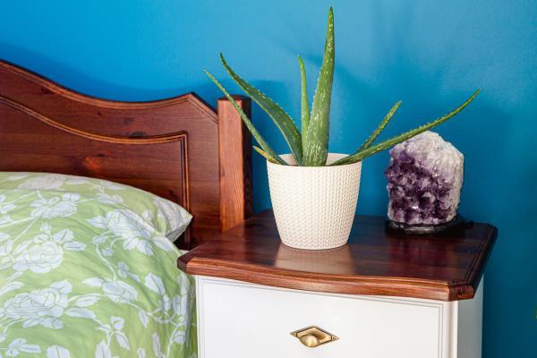 Plantas que producen oxígeno por la noche - Aloe vera