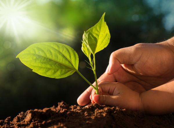 Valores ambientales: qué son y ejemplos - Cuáles son los valores ambientales