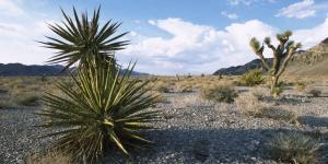 Principales ecosistemas de México y sus características