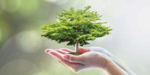 Valores ambientales: qué son y ejemplos