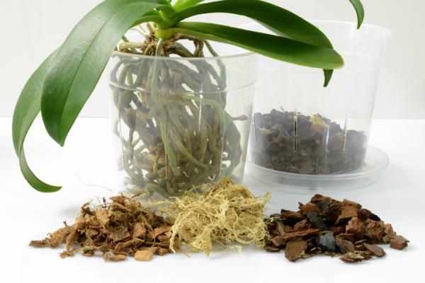 Cómo plantar orquídeas - Macetas para orquídeas: cuál elegir