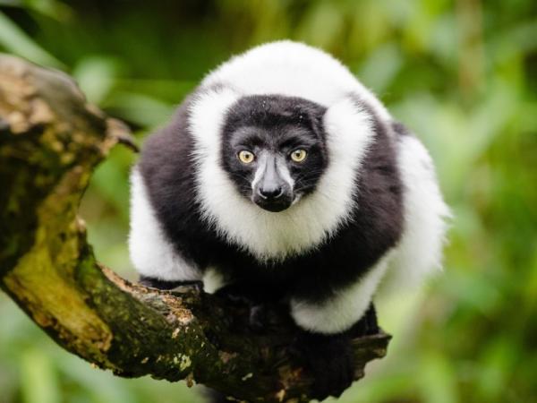 Por qué es importante proteger a los animales en peligro de extinción - Por qué es importante proteger a los animales en peligro de extinción - razones