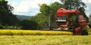 Agricultura extensiva: qué es, características, ventajas y desventajas