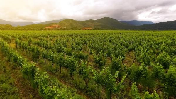 Agricultura extensiva: qué es, características, ventajas y desventajas - Desventajas de la agricultura extensiva