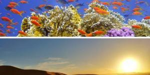 Ecosistema acuático y terrestre: qué es y diferencias