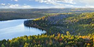Bosques boreales: características, flora y fauna