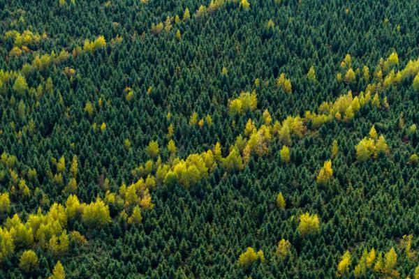 Bosques boreales: características, flora y fauna - Qué son los bosques boreales