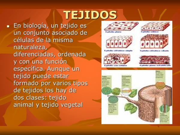 Tipos de tejidos vegetales - Diferencias entre los tejidos vegetales y los tejidos animales