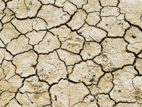 Desertificación: definición, causas y consecuencias