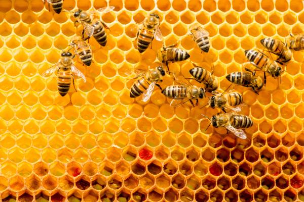 Cómo se comunican las abejas