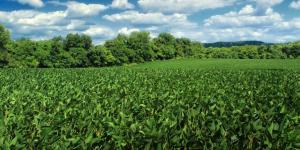 Abono verde: qué es y cómo se hace