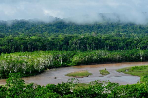 Deforestación del Amazonas: causas y consecuencias - Qué es la Amazonia y cuál es su importancia