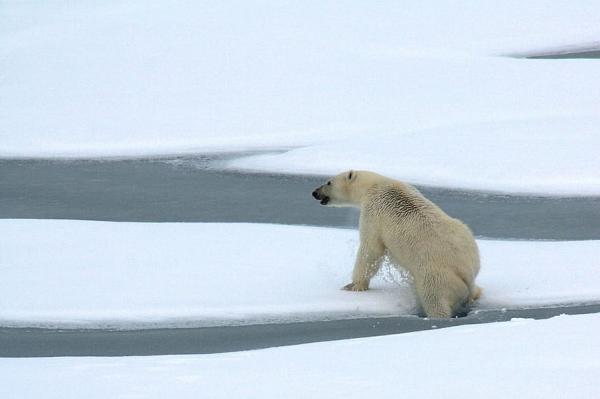 Características del clima polar - Tipos de clima polar