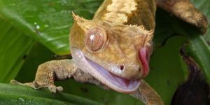 25 animales con los ojos grandes