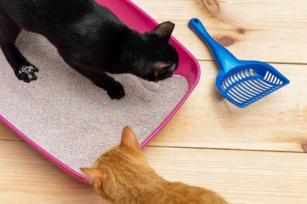 Cómo hacer arena ecológica para gatos