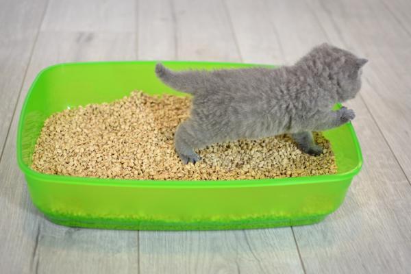 Cómo hacer arena ecológica para gatos - Cómo hacer arena para gatos casera y ecológica con serrín
