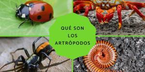 Qué son los artrópodos: características, clasificación y ejemplos