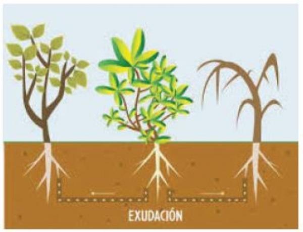 Cómo se comunican las plantas - ¿Las plantas se comunican?