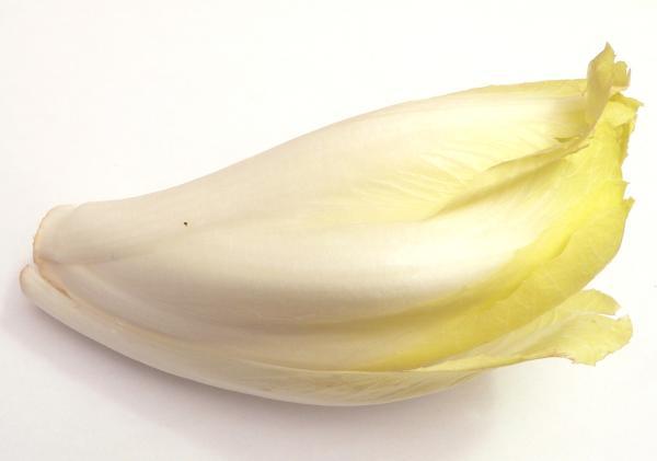 14 tipos de lechugas - Endibia