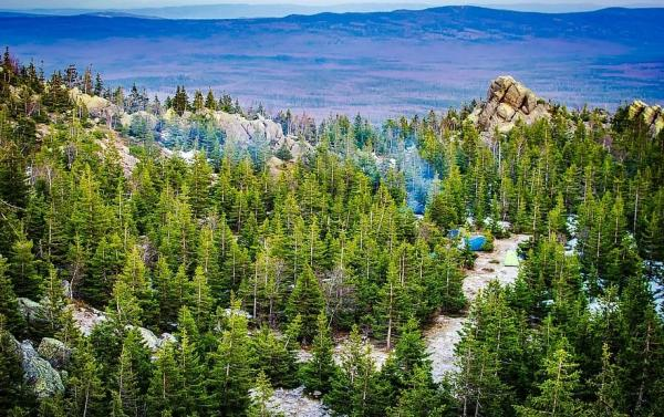 Diferencia entre bosque y selva - Qué es un bosque