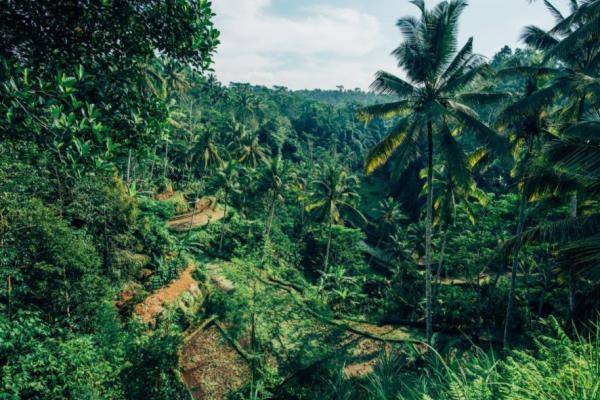 Diferencia entre bosque y selva - Qué es una selva o jungla