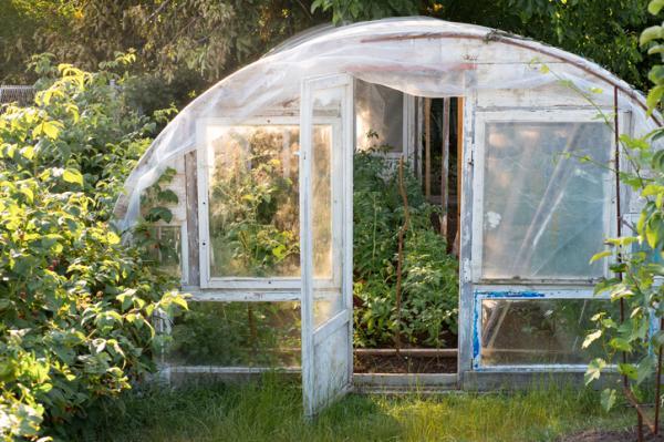 Cultivo de tomate en invernadero - Cultivo de tomate en invernadero - guía de cuidados