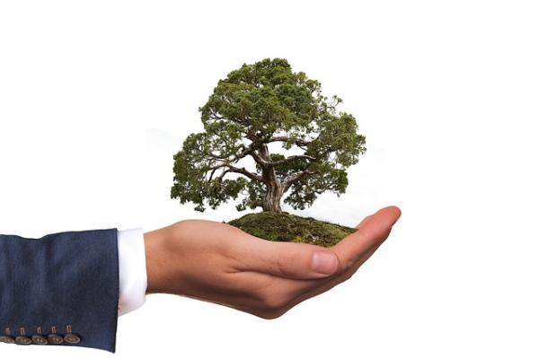 Qué es la ecología profunda - Los tipos de enfoques de la ecología