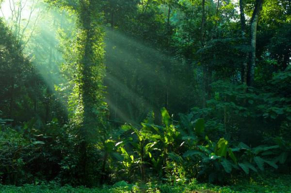 Características de los seres vivos - Qué son los seres vivos - definición sencilla
