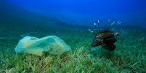 Cómo evitar la contaminación de los mares y océanos