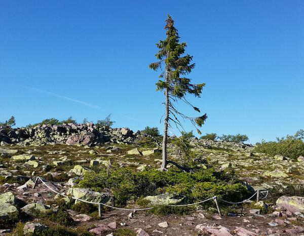 20 curiosidades científicas sobre el medio ambiente - 20 curiosidades científicas sobre el medio ambiente