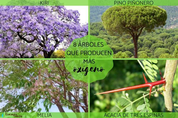 Árboles que producen más oxígeno