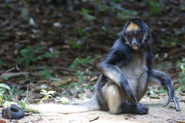 22 Animales En Peligro De Extincion En Venezuela Fotos Y Nombres
