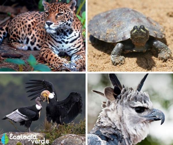 22 animales en peligro de extinción en Venezuela - Más animales en peligro de extinción en Venezuela - lista de nombres y fotos