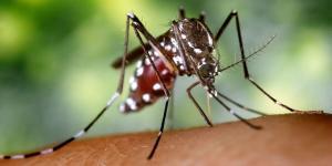 Para qué sirven los mosquitos