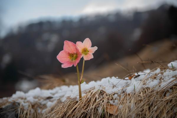 10 Plantas De Exterior Resistentes Al Frio Y A La Sombra Nombres Y - Plantas-exterior-resistentes