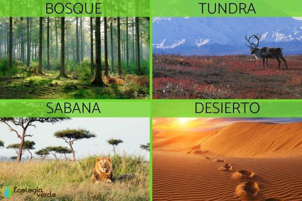 Regiones naturales: qué son, cuáles son y sus características - Cuáles son las regiones naturales - ejemplos