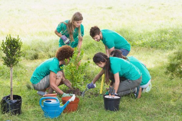Cómo evitar el cambio climático - Participa en la reforestación