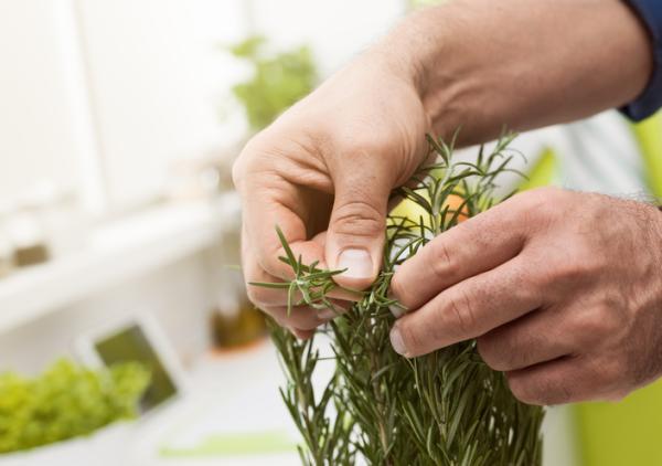 Cómo cuidar la planta de romero en maceta - Poda del romero y posibles plagas