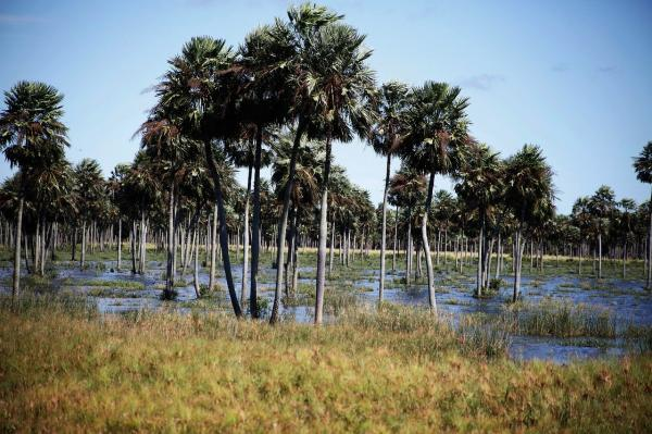Regiones naturales del Paraguay - Región Occidental