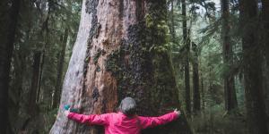 Qué son los ecologistas y qué hacen