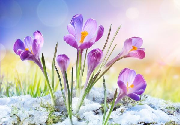 Equinoccio de primavera 2021: hemisferio norte y sur