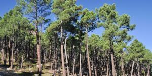 Bosque mediterráneo: características, flora y fauna