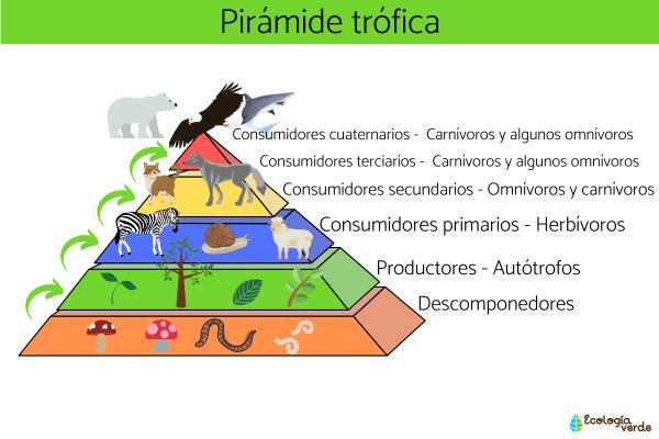 Organismos productores: qué son y ejemplos - Cuáles son los organismos productores, consumidores y descomponedores