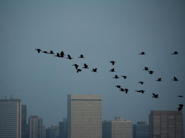¿La contaminación lumínica cómo afecta a los seres vivos? - Consecuencias de la contaminación lumínica para la biodiversidad