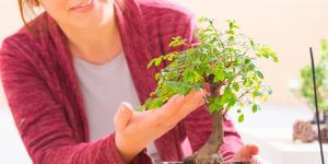 Dónde colocar un bonsái según el Feng Shui