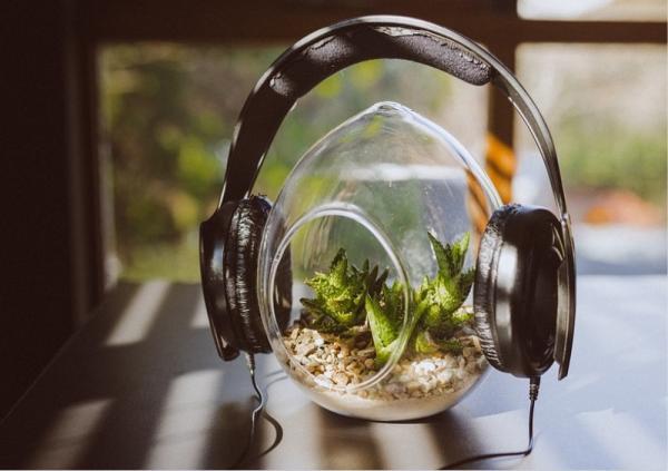 ¿Es buena la música para las plantas?
