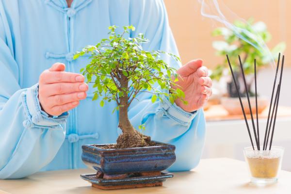 Dónde colocar un bonsái según el Feng Shui - Qué significa tener un bonsái en casa según el Feng Shui